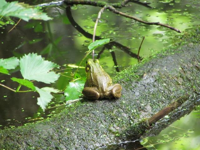 Froggie 3