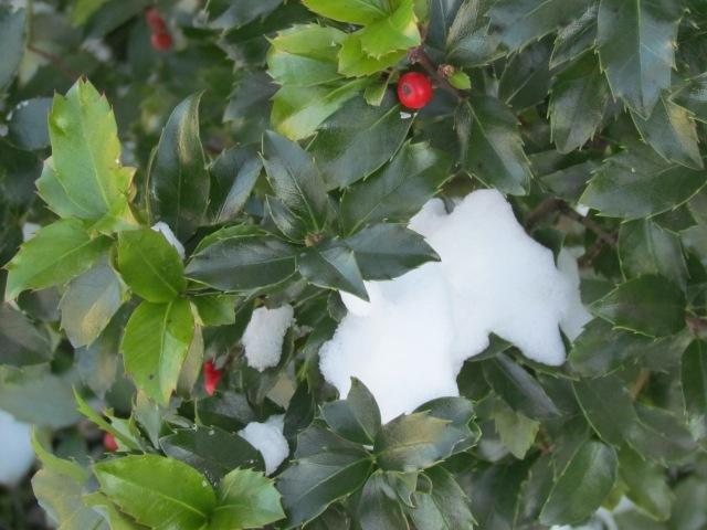 winter bush