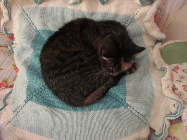 purl dreams kitty approved