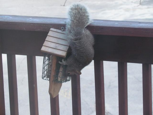 expletive squirrel