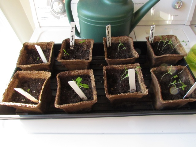 plants 4.1