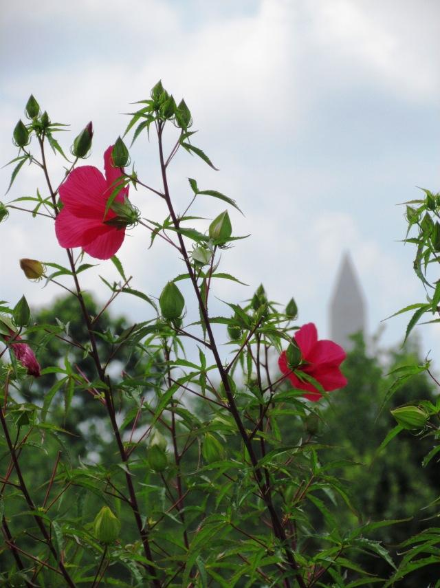 washington flower