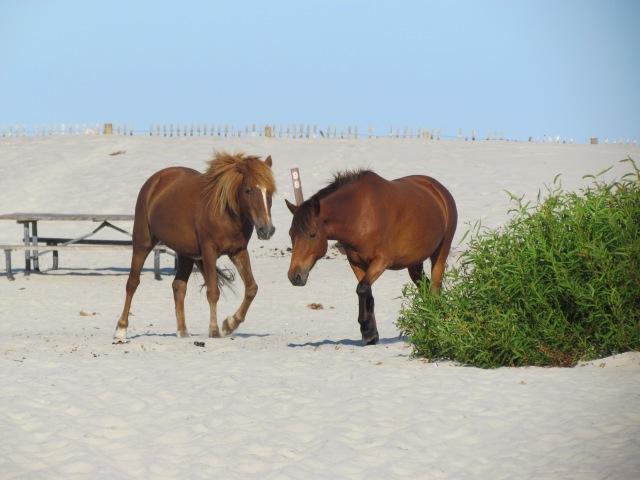 ponies beach