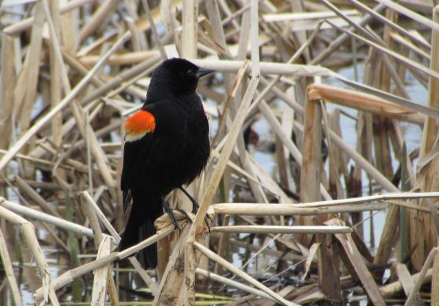 handsome birdie